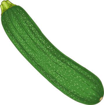 Fresh Zucchini or Courgette