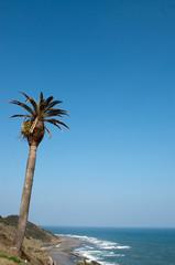椰子の木と空と水平線