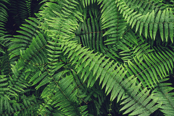 Ferns Leaf Forest Outdoor Tropical Nature abstract Background