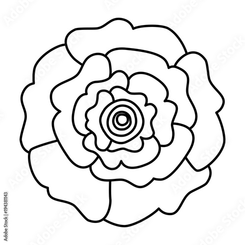 Carnation flower outline