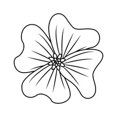 flower periwinkle delicate decoration floral nature petals vector illustration outline desing