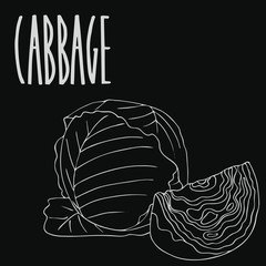 Isolate green cabbage vegetable as chalk on blackboard. Close up clipart in chalkboard style. Hand drawn icon