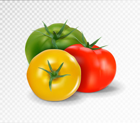 Group of three realistic tomatoes isolated on a transparent background. Red, yellow and green tomato set. Vector 3d illustration.