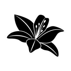 flower lily delicate decoration floral nature petals vector illustration black image