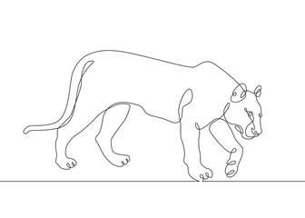continuous line drawing lioness and tiger