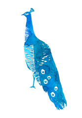 Peacock bird. Watercolor illustration isolated on white