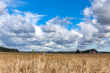 Wheat fields of Lohja