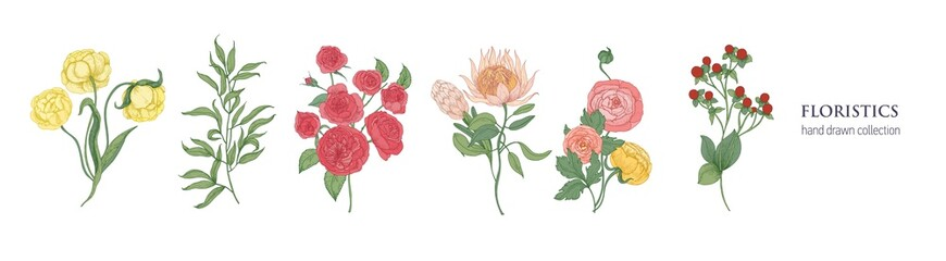 Set of blooming flowers and decorative flowering plants for floristics isolated on white background. Bundle hand drawn of elegant floral decorations. Natural vector illustration in vintage style.