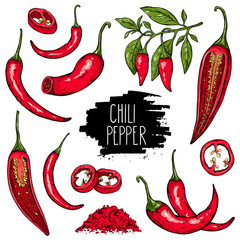 Hand drawn vegetable set of mexican hot pepper chili, slices, halves, crushed pieces and branch of peppers. Vegetable isolated on white background with label. Vector sketch illustration.