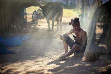 Senior man farmer working in farm and buffalo of his lifestyle in countryside of Asia.