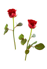 Two red roses.