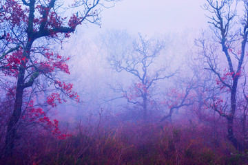 Forest in the fog landscape. Crooked trees without leaves. Curved branches. Sad mood, late autumn, rain red leaves.