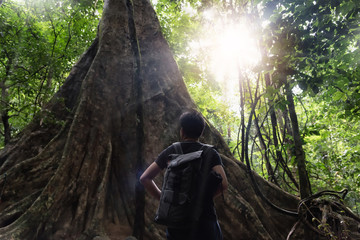 Young asian photographer and tourist standing near the big tree in the rainforest in southern of Thailand in selective focus.
