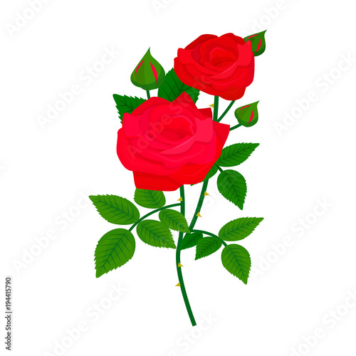 Beautiful Rose Flower Design Decoration Nature Design Floral Drawing
