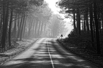 Forest road in Landes country