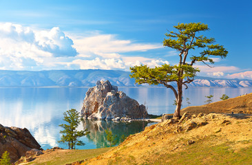 Baikal Lake. Olkhon Island. Beautiful old larch and Shamanka Rock on June afternoon