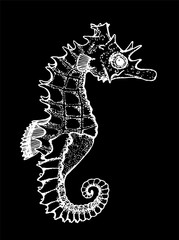 Black and white illustration of a sea animal. Figure seahorse. Chalk on a blackboard.