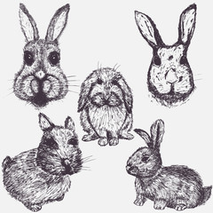 Set of Easter rabbits. Hand drawn sketch elements
