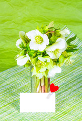 Spring flowers and greeting card with heart. Bouquet of hellebore on green background. Copy space
