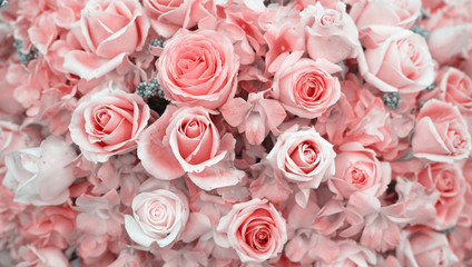 roses for background. pastel color style
