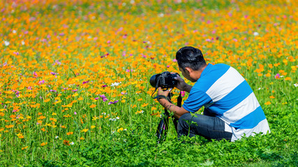 Professional photographer takes photos with camera on tripod at flowers field