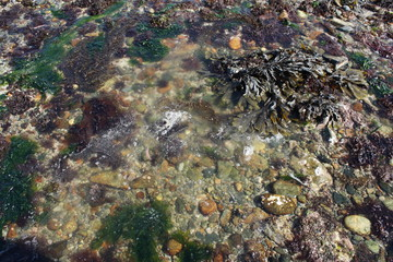 Guernsey rockpool
