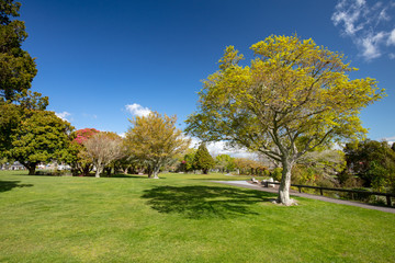 Kuirau Park Rotorua