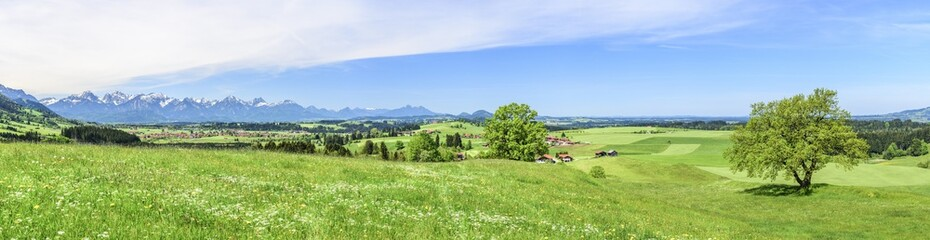 Wall Mural - frische Frühlingswiesen am Alpenrand nahe Trauchgau