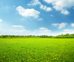 Aluminium Prints Lime green field of spring flowers and perfect sky
