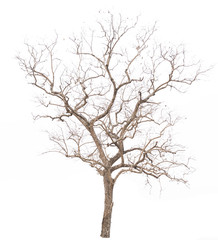 Dead tree on with white background