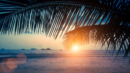 Tropical sea beach through palm leaves during amazing Sunset. .