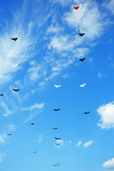 Group of kites in the blue sky