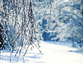 landscape with birch branches covered with shiny ice crystals on the background of snow-white sparkling fresh snow