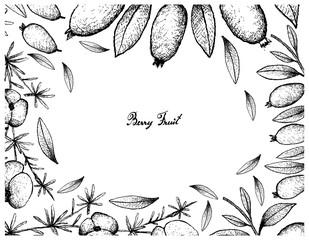 Hand Drawn Frame of Asparagus Fern Fruit and Arrayan Fruits