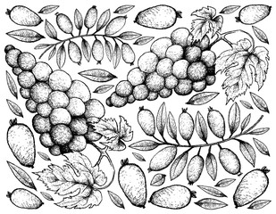 Hand Drawing Background of Red Grapes and Arrayan Fruits