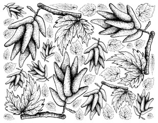 Hand Drawing Background of Ripe Elongated Grapes