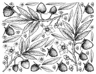 Hand Drawn Background of Fresh Atherton Raspberries