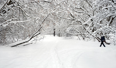 Beautiful landscape with snow-covered path in the forest among the trees on a cloudy winter day