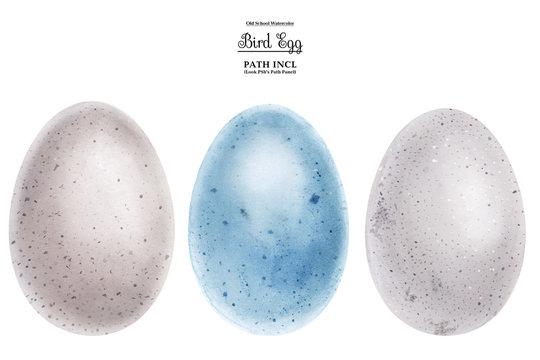 Realistic watercolor illustration, eggs