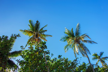 tops of palm trees against the blue sky