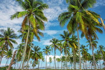 the palm tree forest, green palm trees on a green lawn on sky blue background