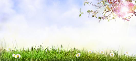 Frühlingslandschaft mit Kirschblüten.