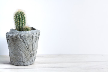 Cactus in a diy concrete pot on a white background