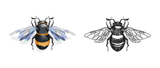 Cartoon and drawing bees