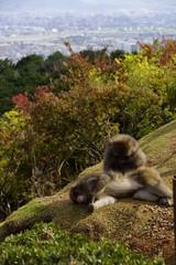 Two pretty monkeys in a wildlife