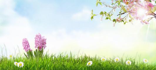 Frühlingslandschaft Mit Bunte Blumen Und Blauer Himmel.