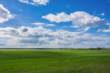 Desktop wallpaper. Background. Beautiful nature. Green field and blue sky with clouds.