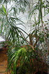 Mix of houseplants in the room