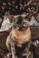 Cat on firewoods