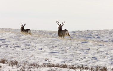 Deer Buck in Winter Wall mural
